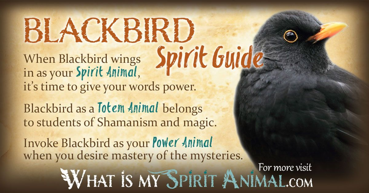 Blackbird Symbolism & Meaning | Blackbird Spirit, Totem & Power Animal |  Spirit Animal Meaning, Crow Spirit Animal, Power Animal