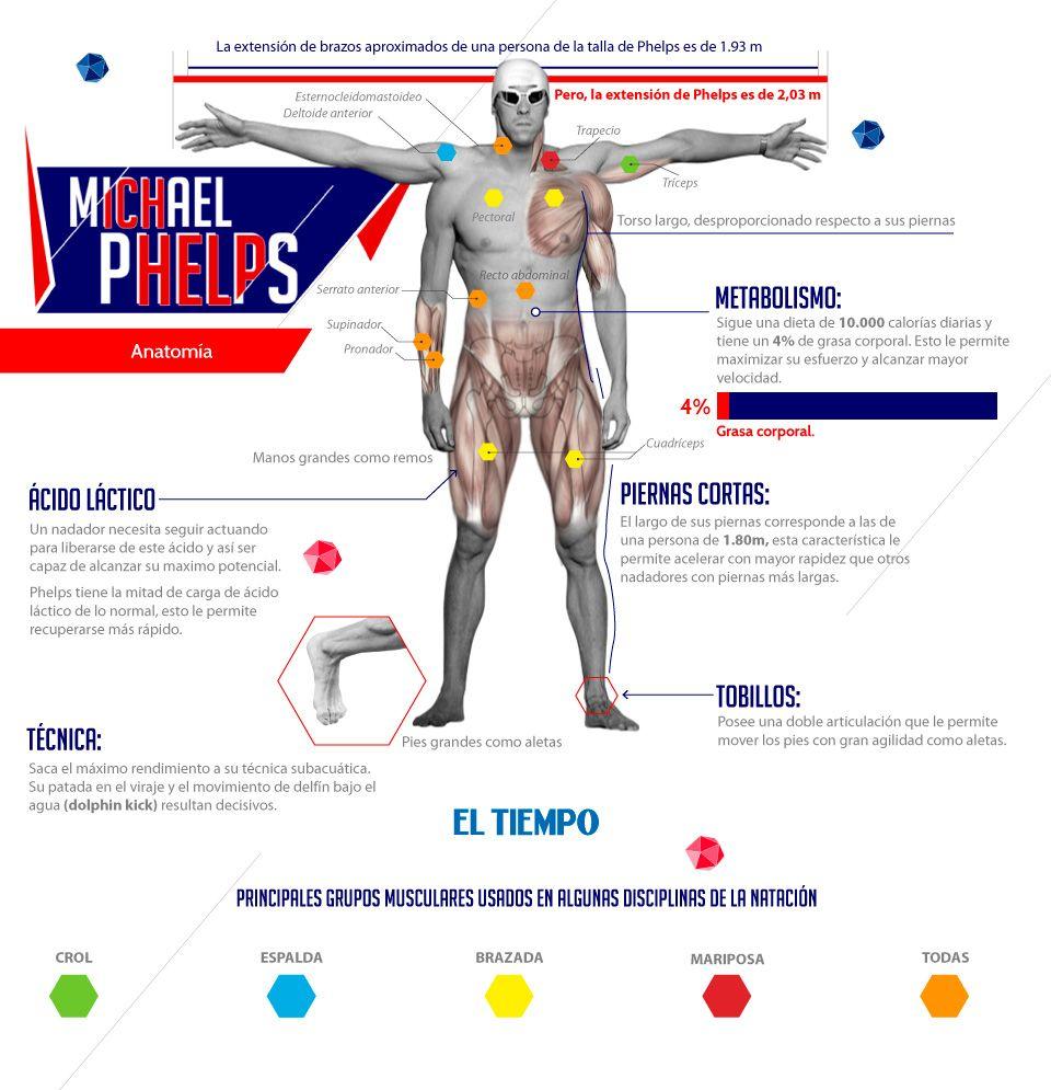 La anatomía sobrenatural de Michael Phelps El nadador estadounidense ...