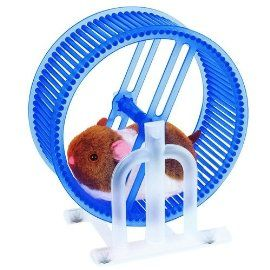 Happy Little Hamster with Blue Workout Wheel Cute