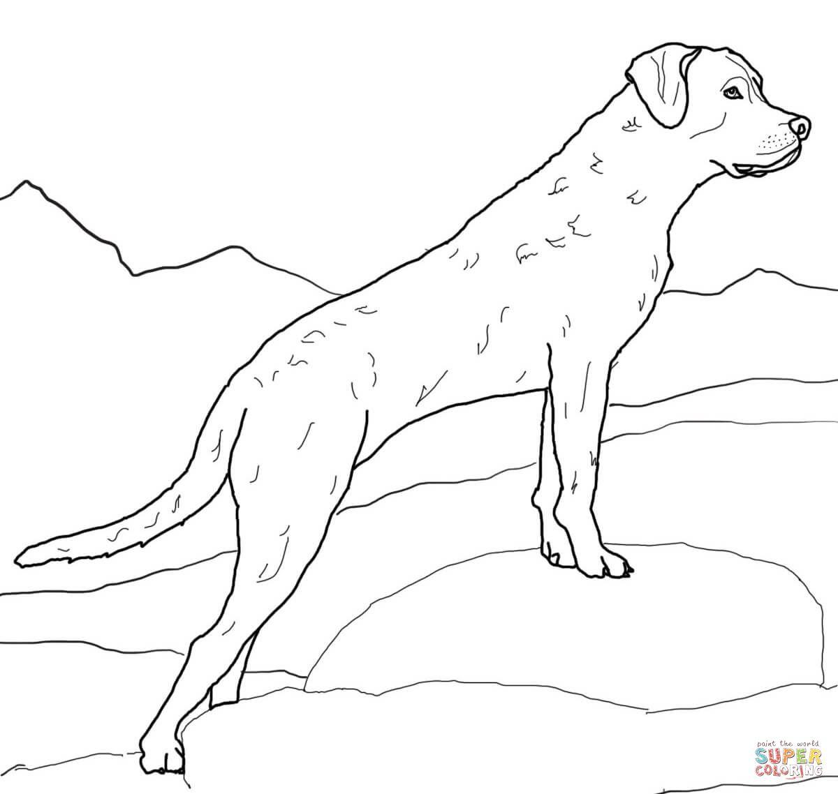 Chesapeake Bay Retriever Dog Coloring Page Puppy Coloring Pages Golden Retriever Colors [ 1138 x 1200 Pixel ]