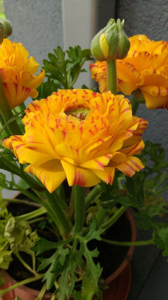 30 types of orange and yellow flowers hd images beautiful 30 types of orange and yellow flowers hd images beautiful flowers orange flowers yellow flowers and pretty flowers mightylinksfo