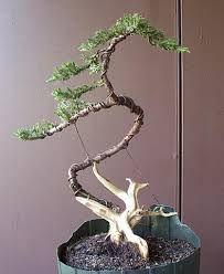 image result for miniature copper wire bonsai trees wire jewelry rh pinterest com Boxwood Bonsai wiring juniper bonsai tree