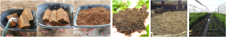 Bioactive Cocopeat:The Distinct use of coconut husk in growth of plants.