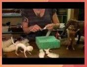 To Needle Felt  Begin Scuplting Sarafina Fiber Art Episode 3  YouTube  How To Needle Felt  Begin Scuplting Sarafina Fiber Art Episode 3  YouTube  felting for beginners fr...