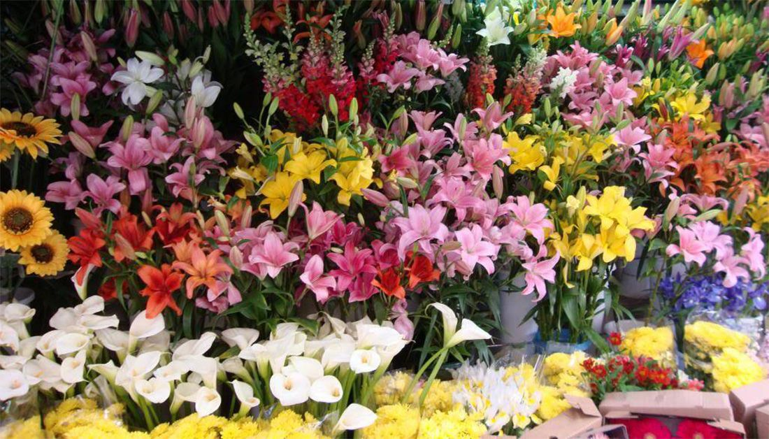 Best Online Plant Nursery In Faridabad To Give You Wonderful Choices Services
