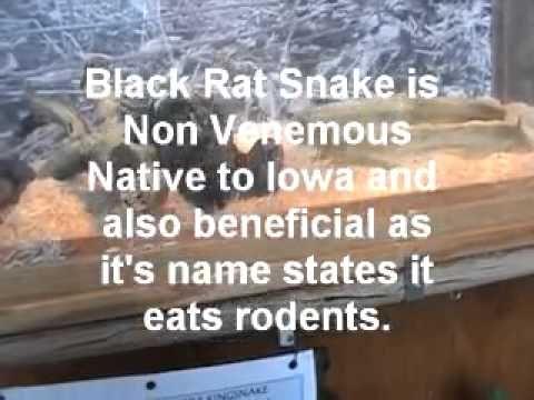 Spirit Lake Iowa Fish Hatchery King and Snake display