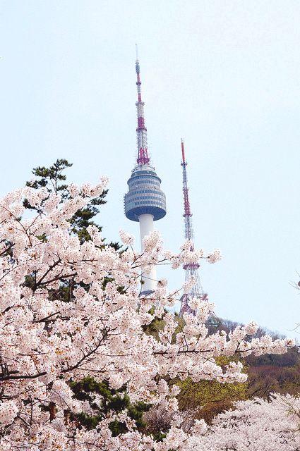 Private Site Korea Travel South Korea Seoul Cherry Blossom
