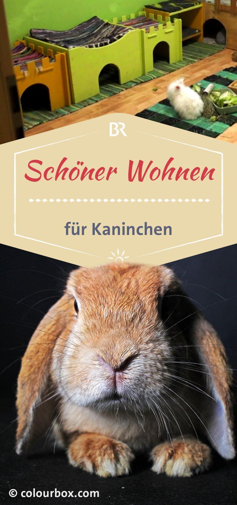 Kaninchen Sind Kuschelig Niedlich Und Vermeintlich Auch In