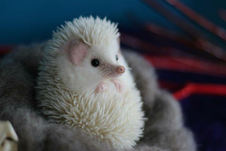 Idea By Ashlee On Hedgehog Animals Beautiful Cute Hedgehog