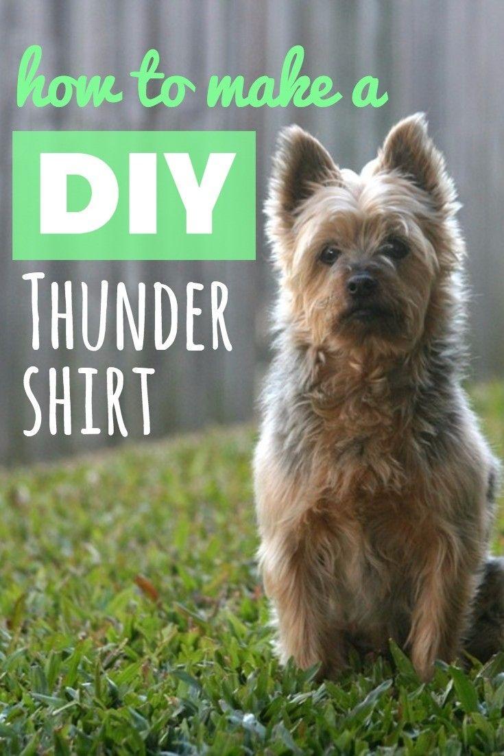 How To Make A Cat Thundershirt