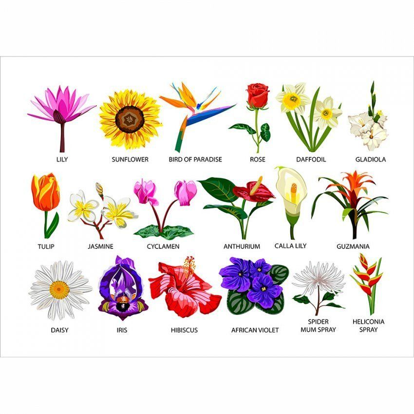 10 Reasons Why Flower Species Is Common In USA