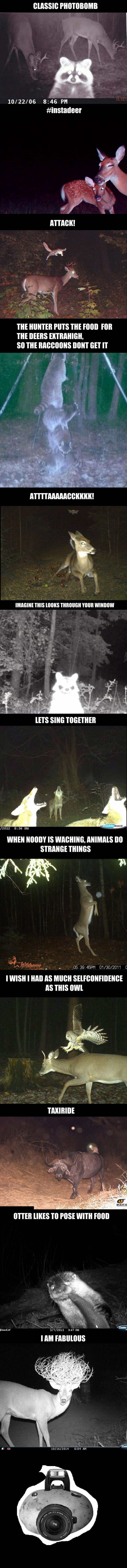 Animals do weird things, when they think they are alone - 9GAG
