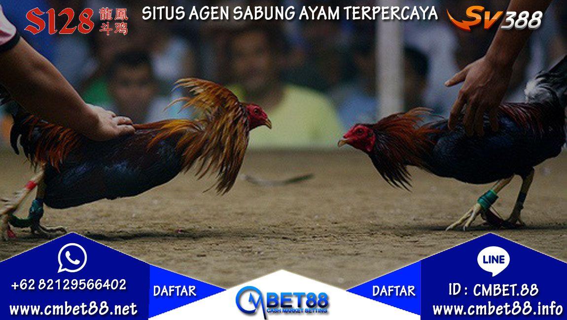 Pin Di Agen Sabung Ayam Online