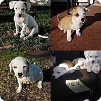 Adopt A Pet The Chewable Litter Jacksonville Fl Pets