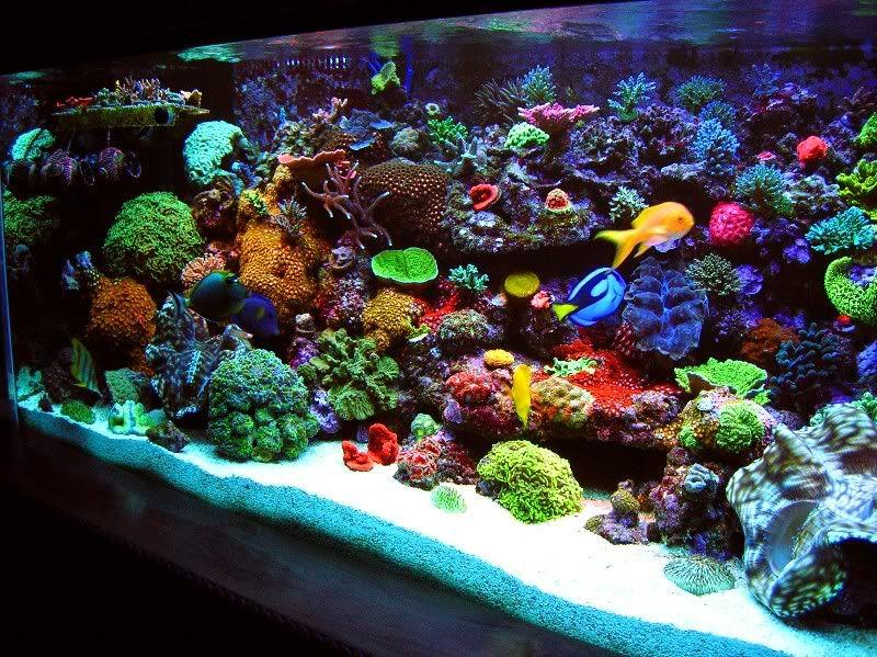 really love this tank great colors saltwater aquariums pinterest meerwasser aquarium. Black Bedroom Furniture Sets. Home Design Ideas