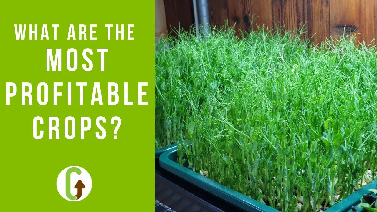 Which Are The Most Profitable Crops To Grow? [& Why There