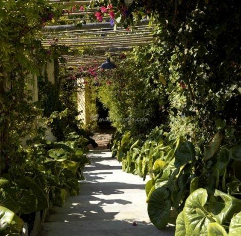 Il 25 Marzo riaprono i giardini di Villa della Pergola ad