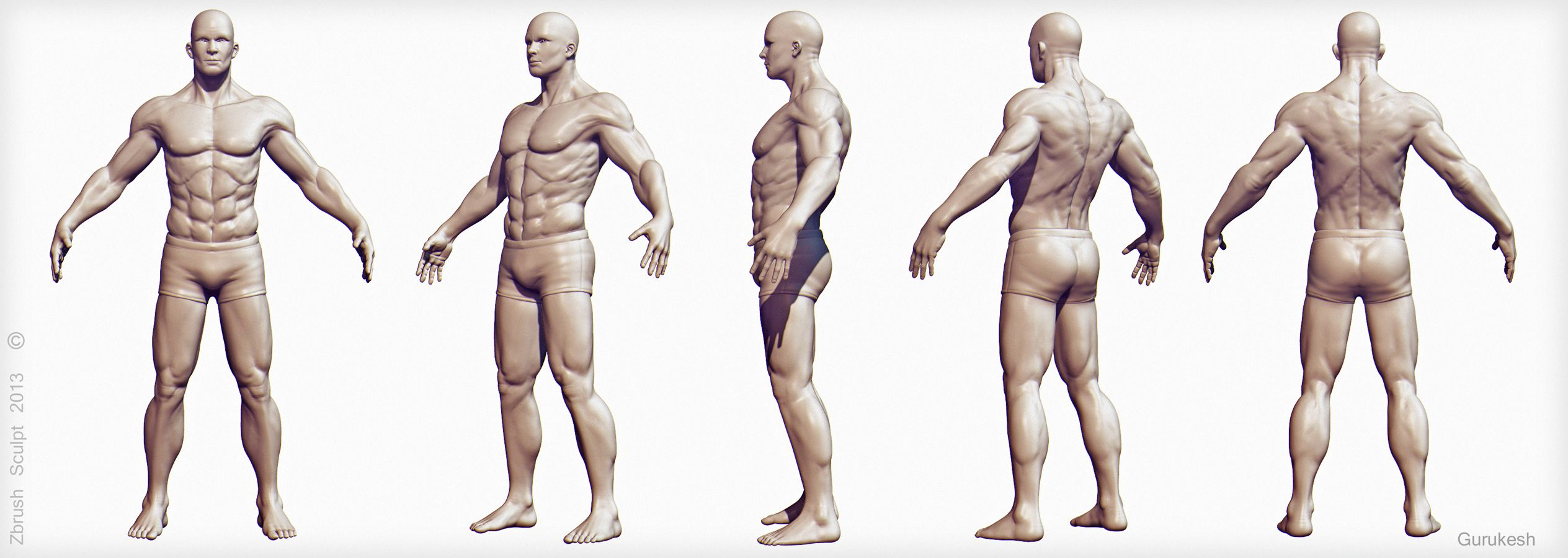 Male Anatomy For Artists Images Human Body Anatomy
