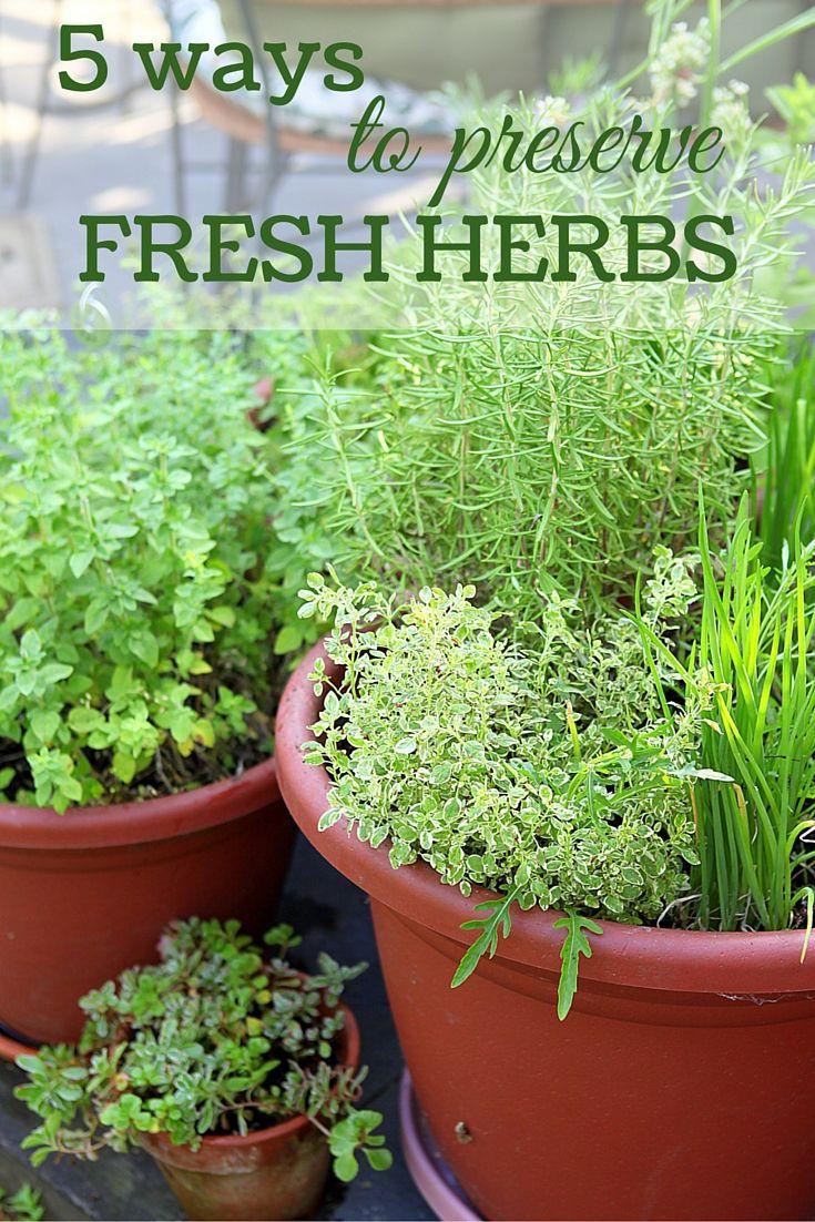 how to store fresh cut herbs