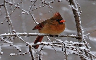 Winter Birds in Pennsylvania | | FEATHERED FRIENDS | Birds
