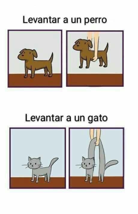 Pin By Ana Cecilia On Gatitos Funny Animal Jokes Really Funny Memes Funny Animal Memes