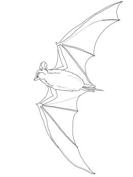 Mexican Free Tailed Bat Bat Coloring Pages Animal Coloring