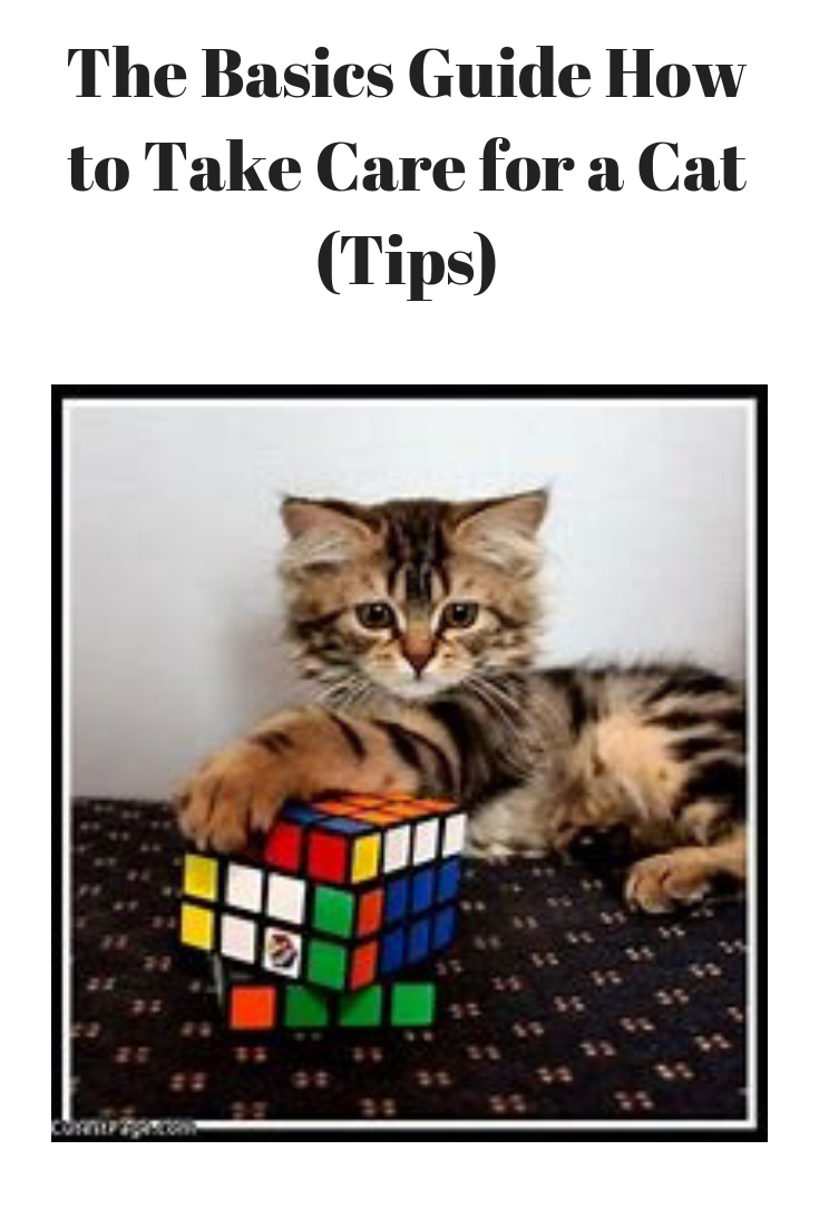 The Basics Guide How To Take Care For A Cat Tips Pets Care Tips Cat Care Pet Care Cat Care Tips
