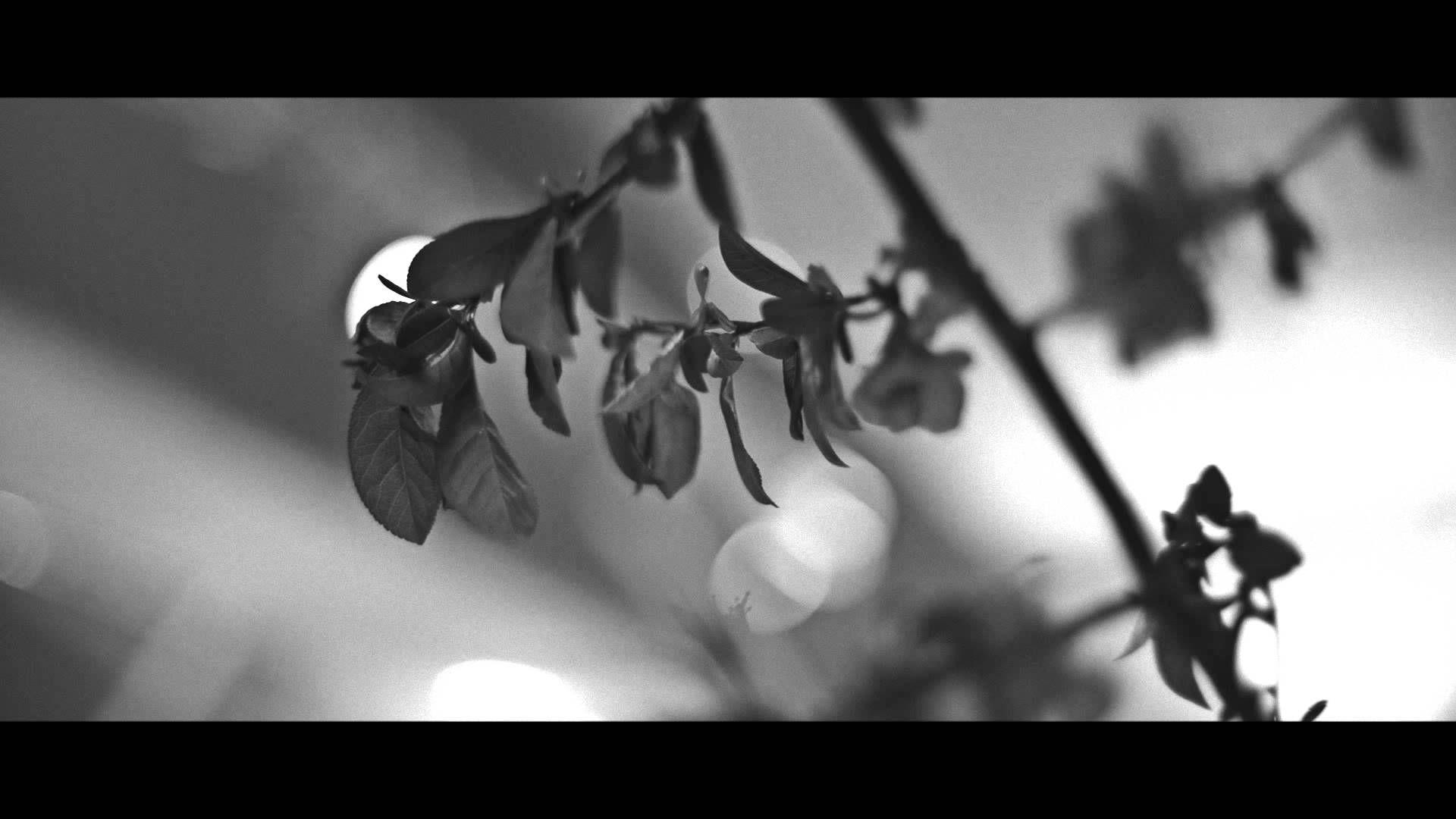 Nightingale experience video