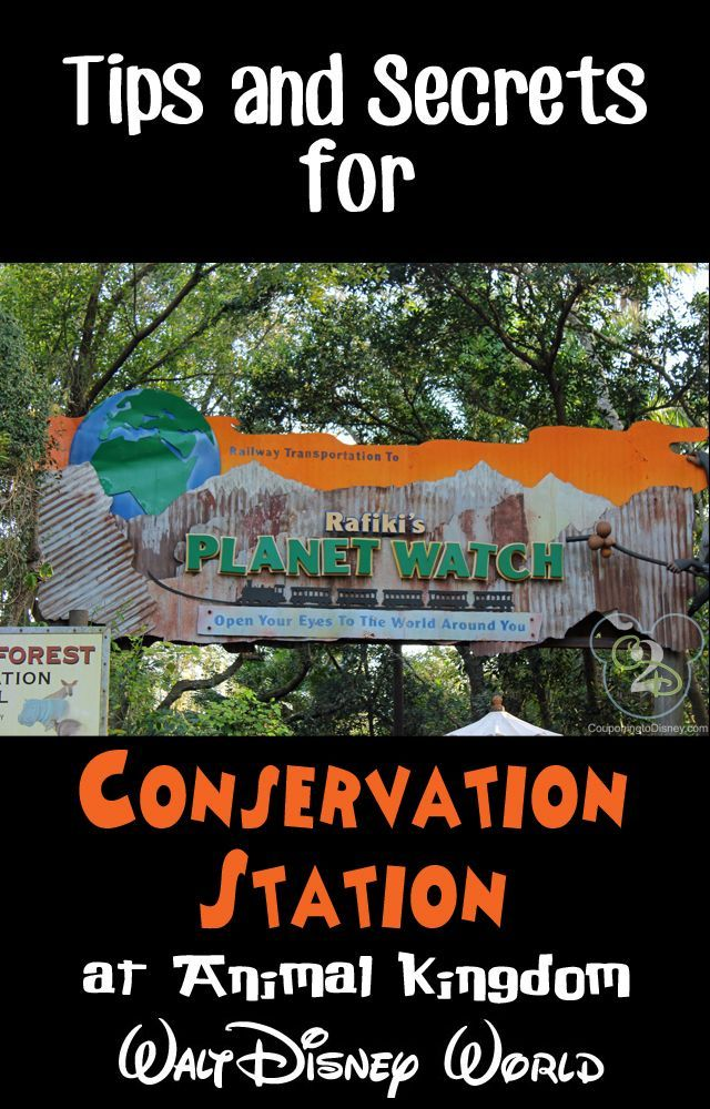 Conservation Station and Rafiki's Watch in Animal
