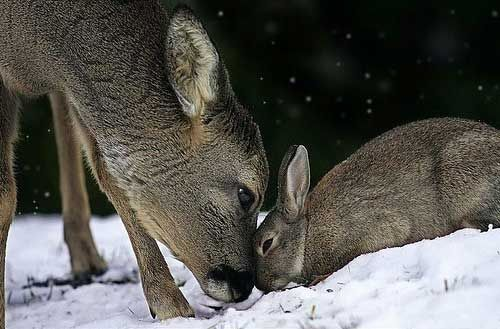 {the fawn and the hare} sweet story. photo by Tanja Askani
