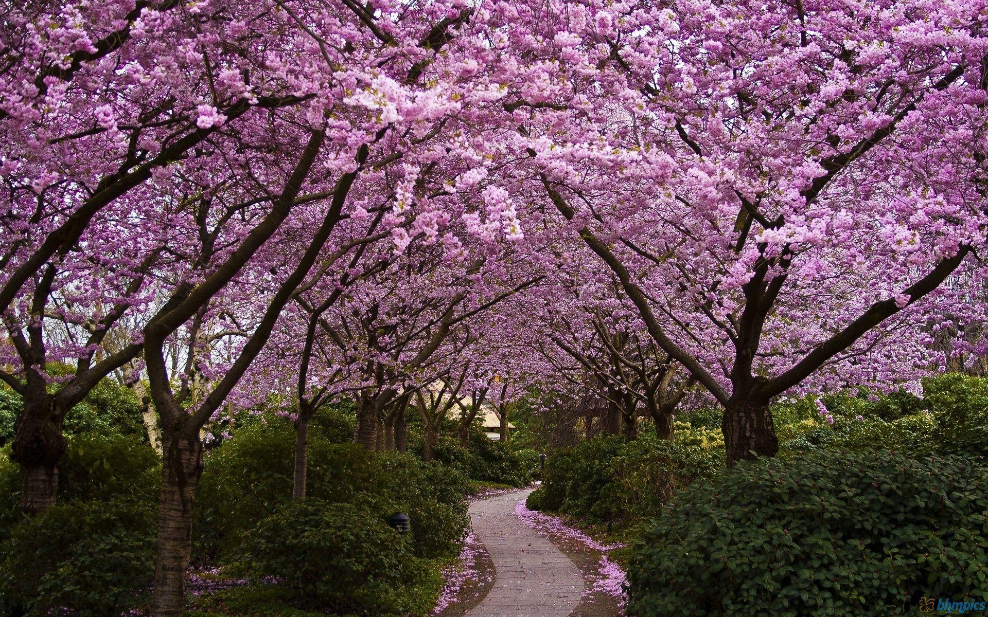 """Risultato immagini per sakura garden"""""""