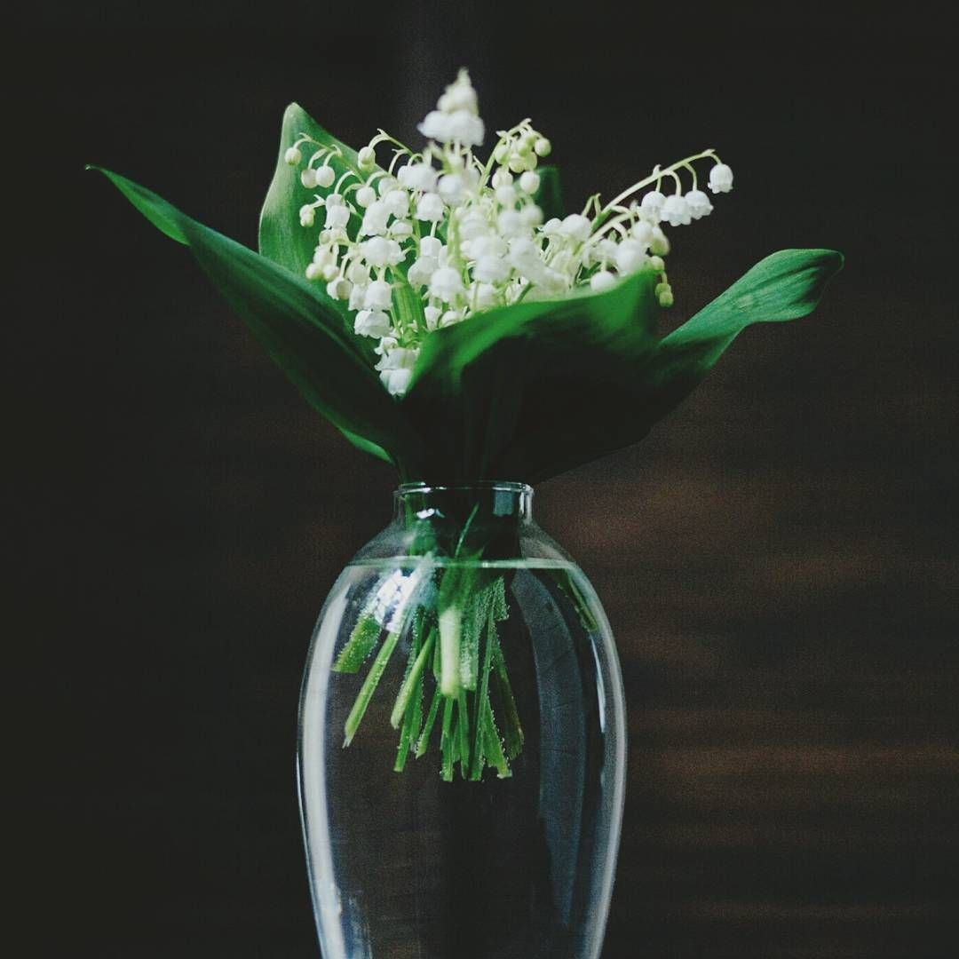 Lily of the valley still dacha life natureperfection vase flowers stilllife gentle garden calm floralperfection floral lilyofthevalley lowkey minimal minimalism ipreview preview reviewsmspy