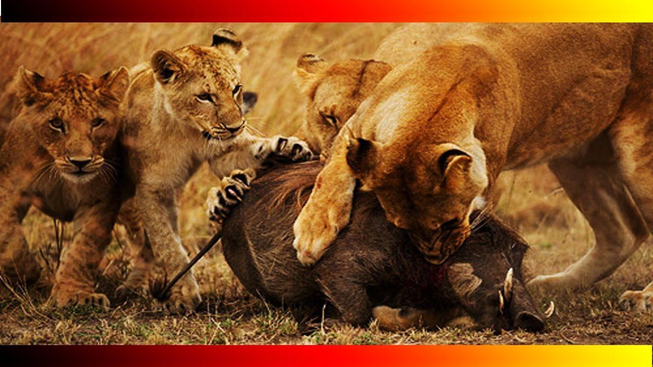 WILDLIFE ANIMALS CHANNELDiscovery Animals Documentary