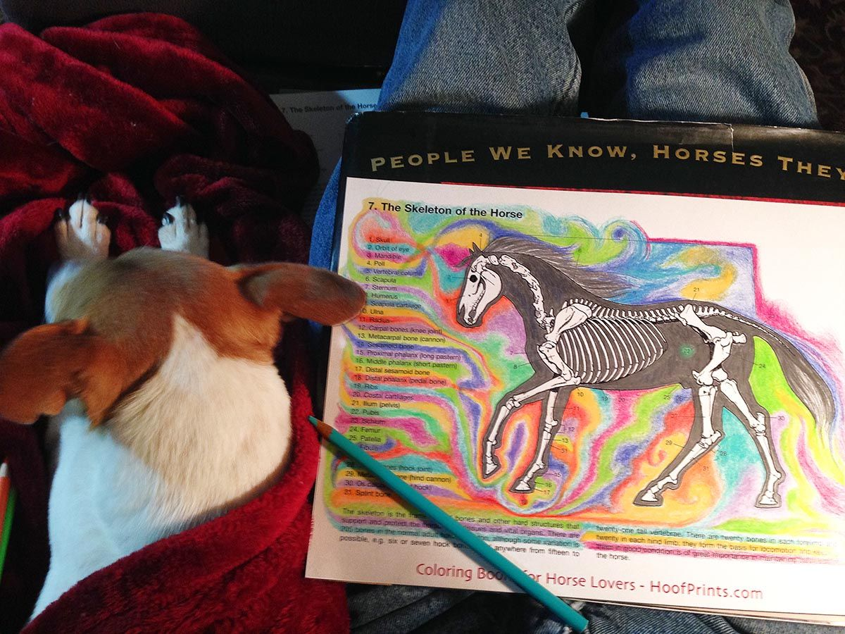 http://www.hoofprints.com/Horse-Anatomy-Coloring-Book/productinfo ...