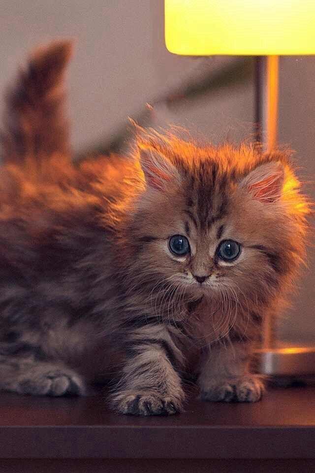 Cute kitten Yeah