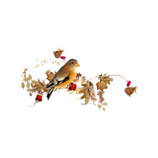 0 6f098 C32db2d1 XL Liked On Polyvore Featuring Birds Autumn Fall Flowers