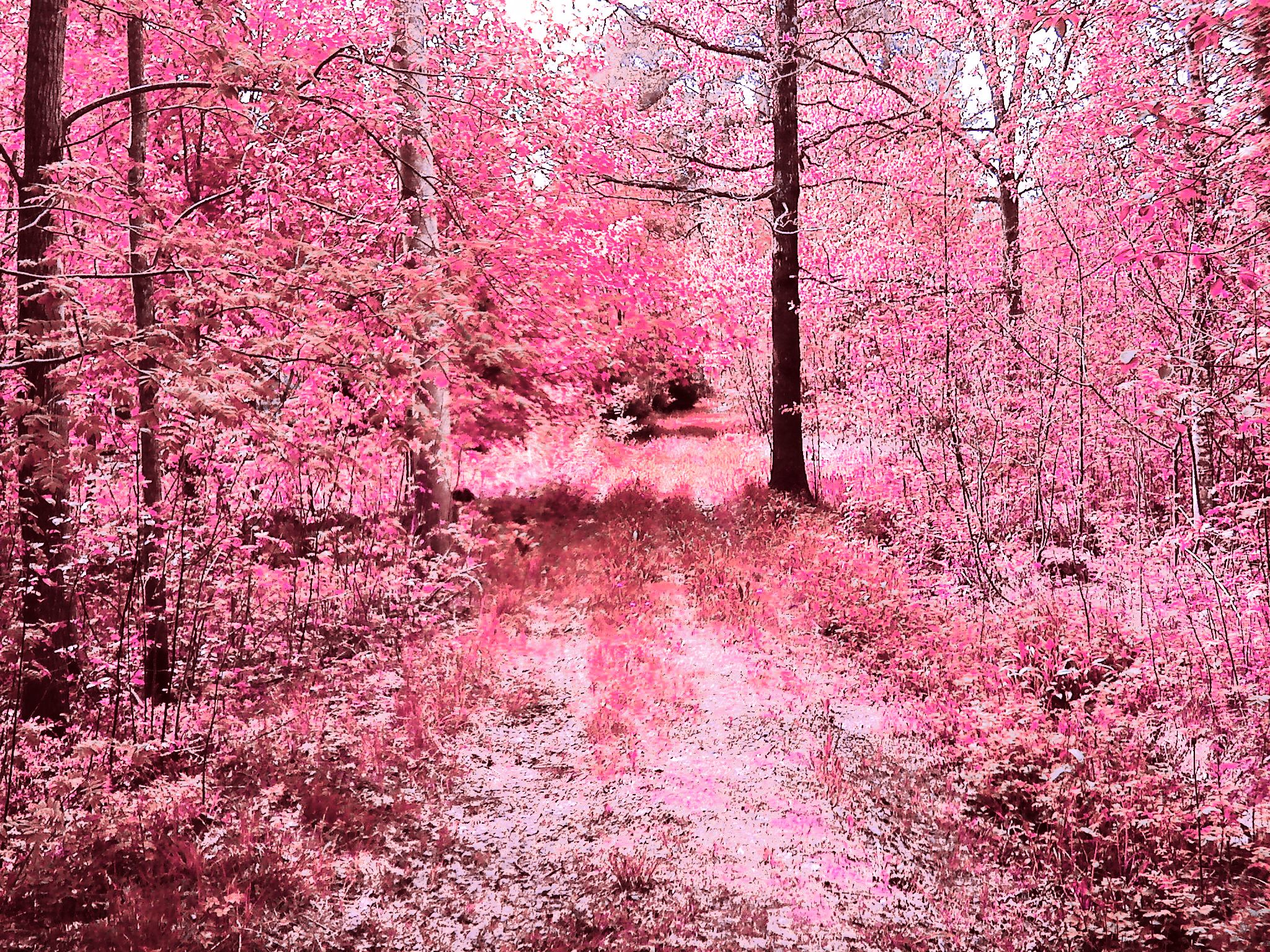 Permalink to Pink Forest Hd Wallpaper