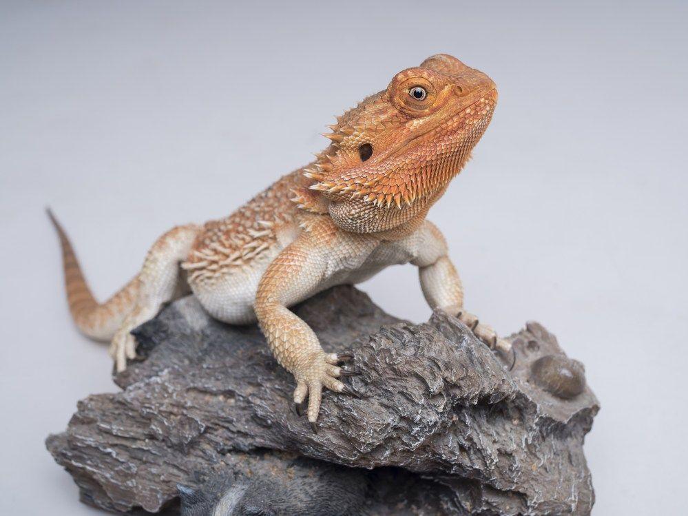 Pet Photography In 2020 Animal Photography Animal Photoshoot