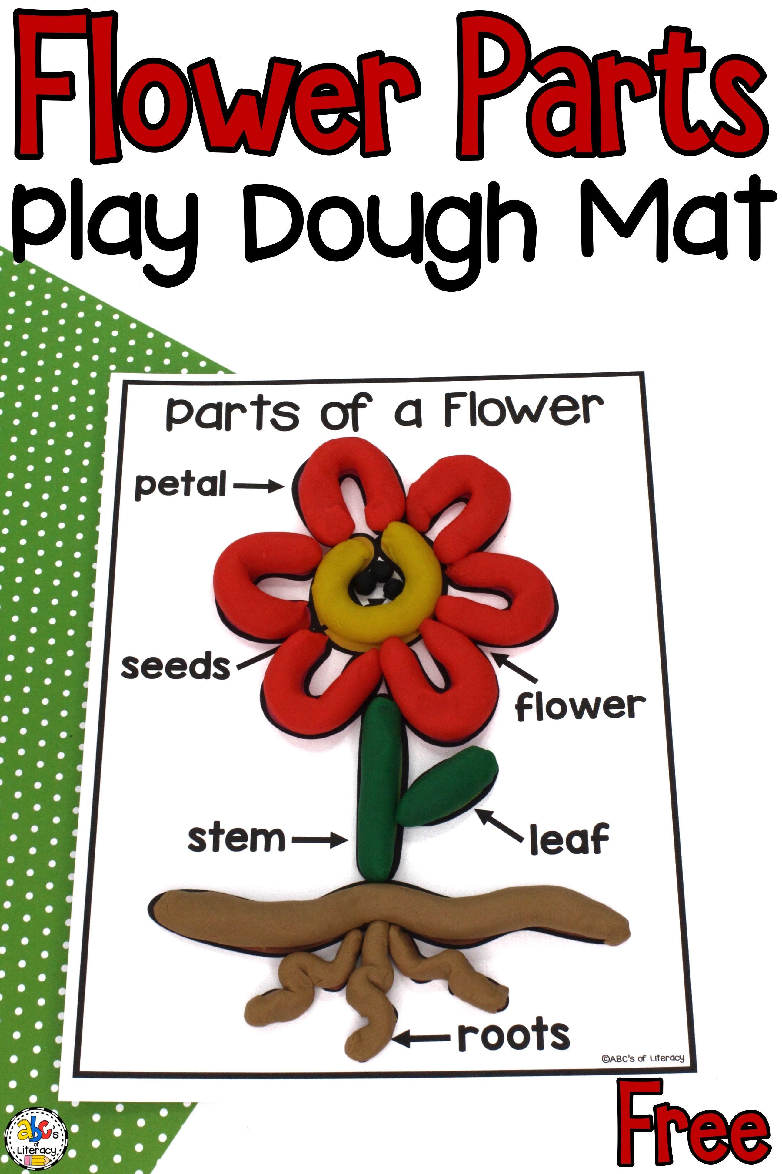 Flower Parts Play Dough Mat Sensory Activity For Kids Parts Of A Flower Flower Activities For Kids Plant Activities [ 3871 x 2581 Pixel ]