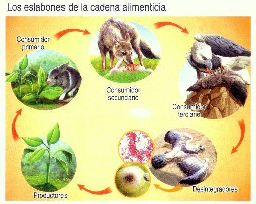 Lamina Cadena Alimenticia Mis Imágenes Escolares Tipos De Ecosistemas Alimenticio Clasificacion De Seres Vivos