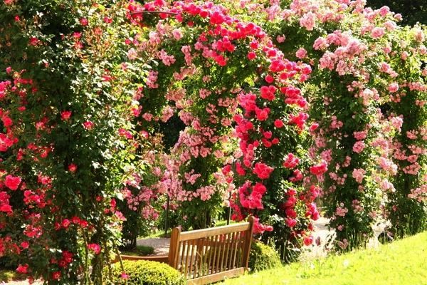 The Charming And Romantic Beauty Of A Splendid Rose Garden Rose