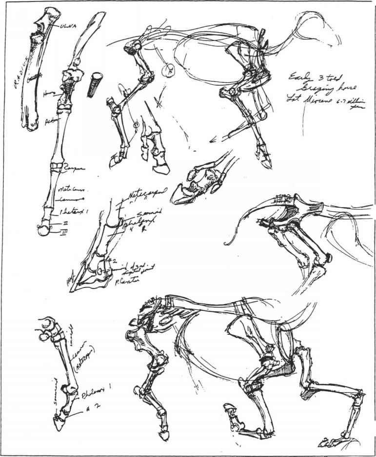ANIMAL DRAWING MANUAL BY GLENN VILPPU PDF
