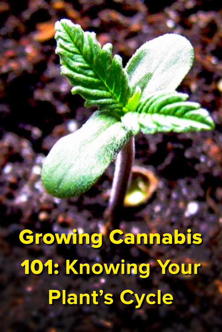 Cannabis Growing 101: Know Your Plant\'s Life Cycle | Gardening ...