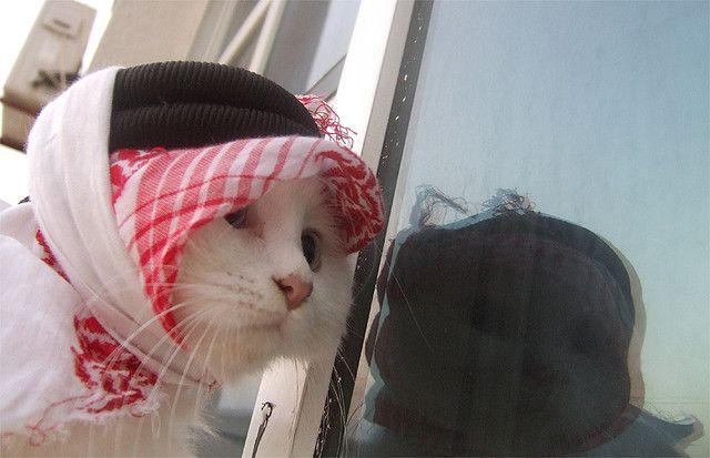 arab cat | Funny cat compilation, Funny animal videos, Cats