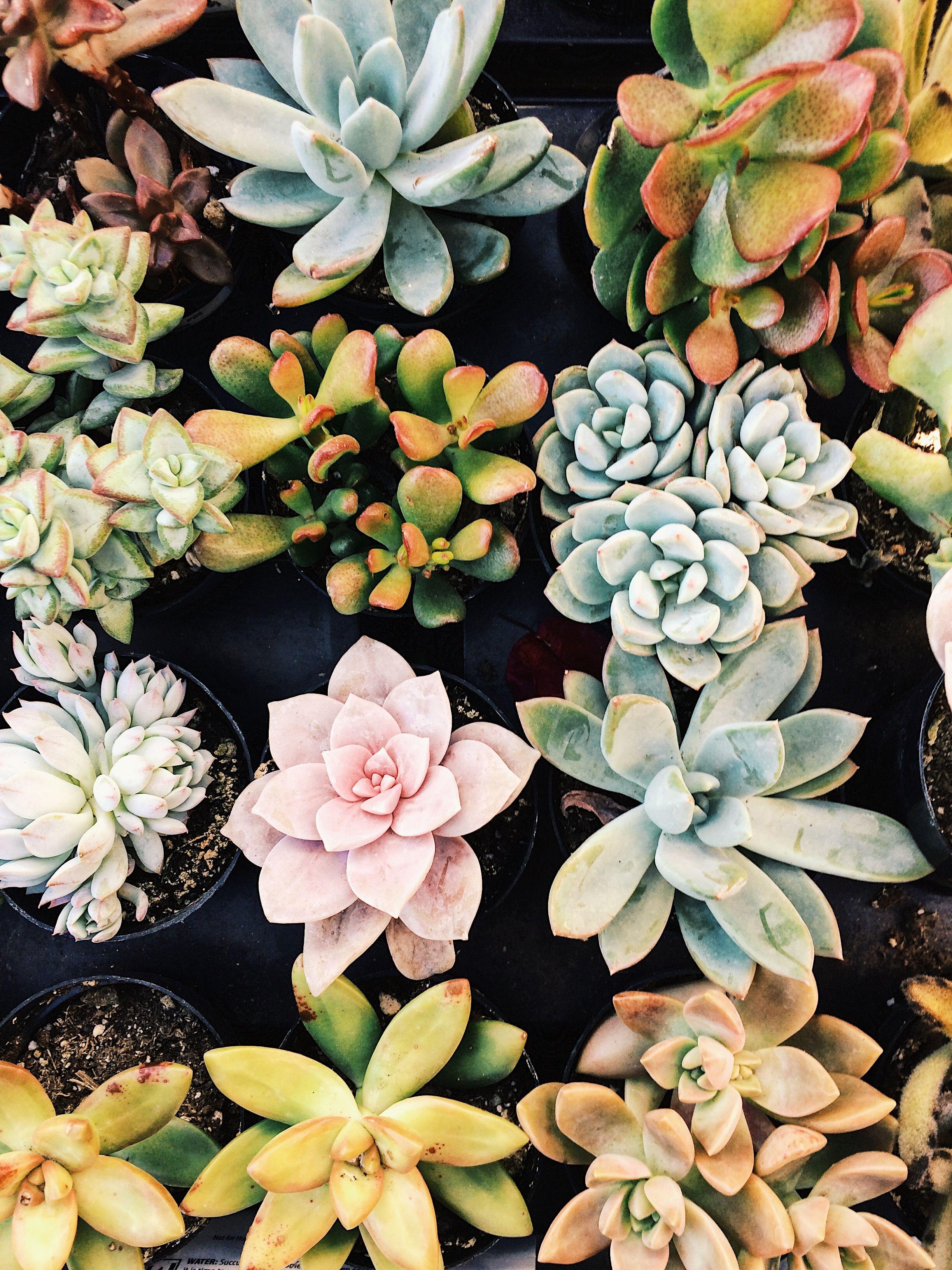 Home Depot Succulents Succulents Wallpaper Perfect Plants Plant Photography
