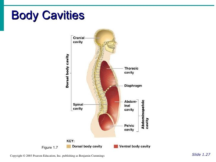 Pin By M Williams On Medical Terminology Pinterest