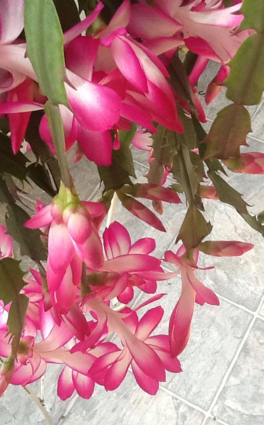 cactus flower bug YourPinterestLikes Cactus flower