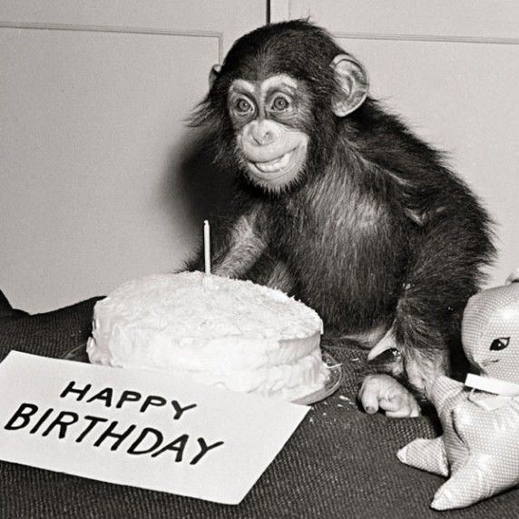 поздравление от обезьяны на день рождения