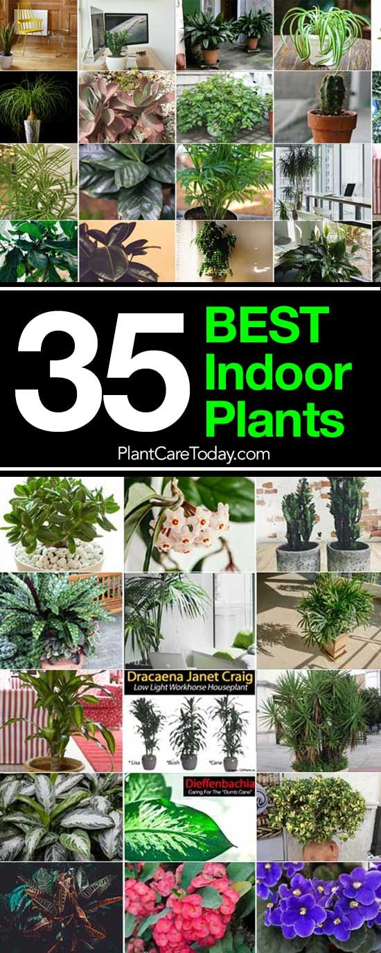 35 Of The Best Indoor Plants For Your Home Grandes Plantes D