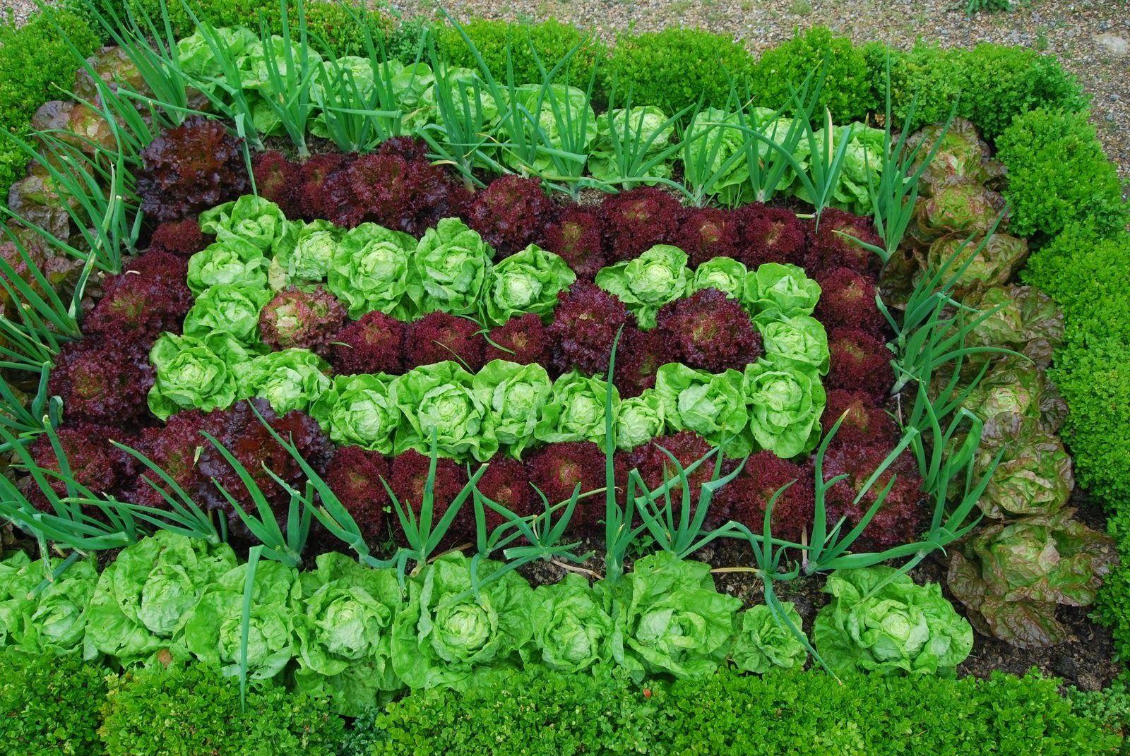 nice vegetable garden plants jpg 1600 1071 gardening